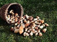 houbaři si přijdou na své - pronájem srubu Dolní Morava