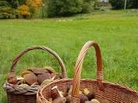 roustou hned u chalupy - ubytování Olešnice v Orlických horách