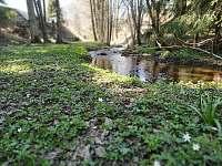 Bartošovický potok, relax při opékání - pronájem chalupy