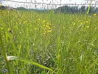 květnová louka - pronájem chalupy Horní Čermná