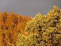 Po večerní bouřce - Dolní Orlice