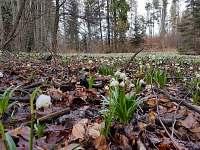 Horní Studénky na jaře