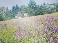 Na Samotě - chalupa k pronájmu - 22 Říčky v Orlických horách