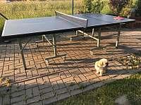 stolní tenis - Olešnice v Orlických horách
