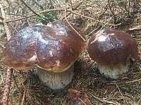 Roubenka Amálka - chalupa - 32 Rýdrovice