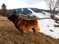 Náš milý host Artuš a Buková hora - chata k pronajmutí Čenkovice