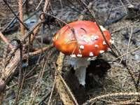I houby tu rostou. Tahle pro krásu - Říčky v Orlických horách