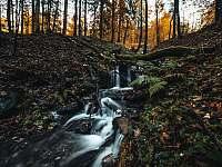 Okolní příroda - Olešnice v Orlických horách - Rzy