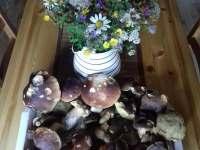 houby 2017 - Říčky v Orlických horách