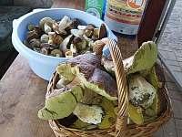 Chalupa u Hejnic Orlický hory houby z lesa -