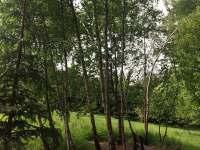Březový háječek - Klášterec nad Orlicí