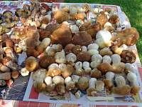 podzimní sběr hub v okolí