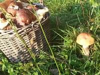 houby u chalupy - Kunvald