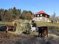 Chata Kovárna - chata - 47 Zdobnice - Kunčina Ves