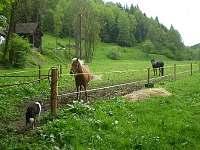 Koně v sousedství