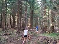 Procházky po lese