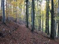 lesy u chalupy ...