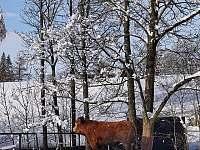 na okruhu potkáte zvířata - koně, krávy, daňky - Horní Orlice