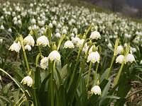 jaro ve Valteřicích - chalupa k pronájmu