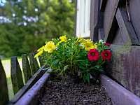 Momentka II. - kytky na verandě - Červená Voda - Šanov