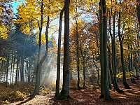 bukový lesík nad Herolticemi -