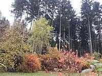 Výhled z okna na zadní zahradu a les - apartmán k pronajmutí Radíkov