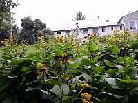 letní zahrada - chalupa k pronájmu Bouzov - Doly