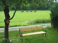 Lavička před chatou na trávníku