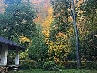 Na podzim se krásně zbarvují stromy. - Hradec nad Moravicí - Žimrovice