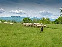 Výhled na Lysou Horu - Těrlicko - Hradiště