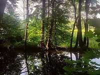 okolí - jedno z ramen řeky Moravy - chalupa k pronajmutí Mladeč