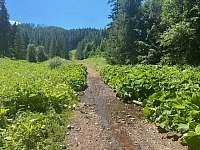 Príroda v okolí s obrovskými lopúchmi - Lučivná - Lopušná Dolina