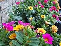 kvety na terase - Liptovský Trnovec