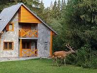 ranní návštěva - chata ubytování Tatranská Štrba