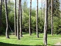 Les u objektu - Mlynčeky