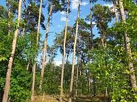 Kerský les