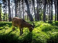 Fauna - Sázava