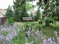 zahrádka s kvetoucími levandulemi