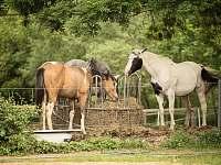 Naše koně - apartmán k pronájmu Hostomice - Bezdědice