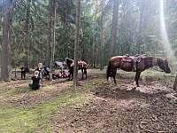 Naše koně - Hostomice - Bezdědice