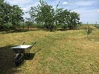 Zahrada - chata ubytování Divišov u Benešova