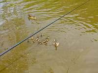 Rybolov před chatou - Sázava