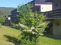 Jaro u apartmánů 1 + 1 od lesa