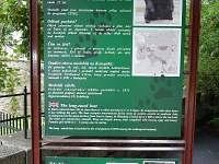 Konopiště - vila k pronájmu - 17