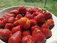 bio jahody - Kamenné Zboží
