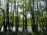 Lesní rybníček kousek za chalupou
