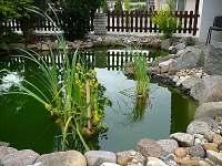 Vodní rostliny