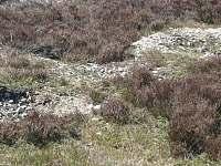 Krátery po munici Jordán Brdy - Obecnice