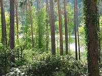 Nebřich - chata k pronajmutí - 4
