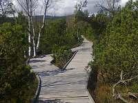Chalupská slať, chodník přes rašeliniště k jezírku